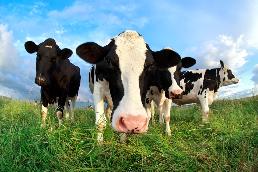 Is grass-fed beef healthier